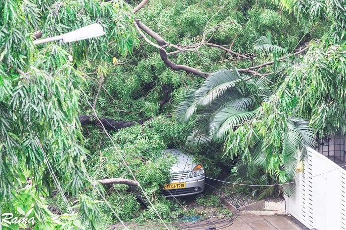 tree 1 of 1 - Cyclone Vardah: last December water; This December cables!