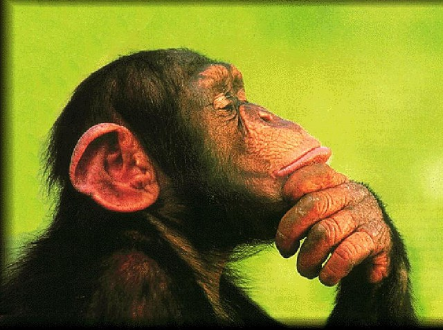 chimp - Freefincal Q & A: Saving vs Spending - What is the purpose of life?