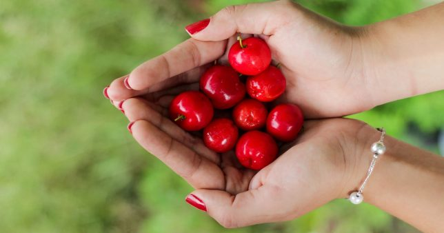 Hands with cherries symbolizing handpicked List of Mutual Funds January 2020