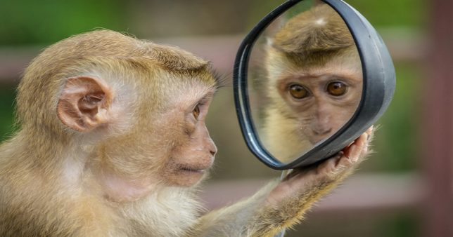 Image of a monkey looking at a mirror in introspection reflecting the titular question of this article Should we exit from equity mutual funds now to prevent further loss