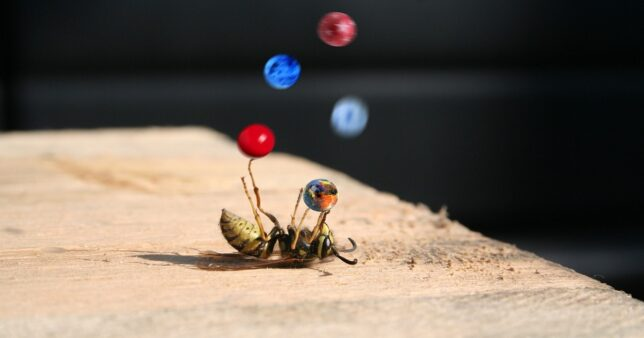 Image of a wasp lying on its back with a superimposed image of marbles moving in the air to give the impression of juggling, act which is similar to portfolio rebalancing discussed in this article